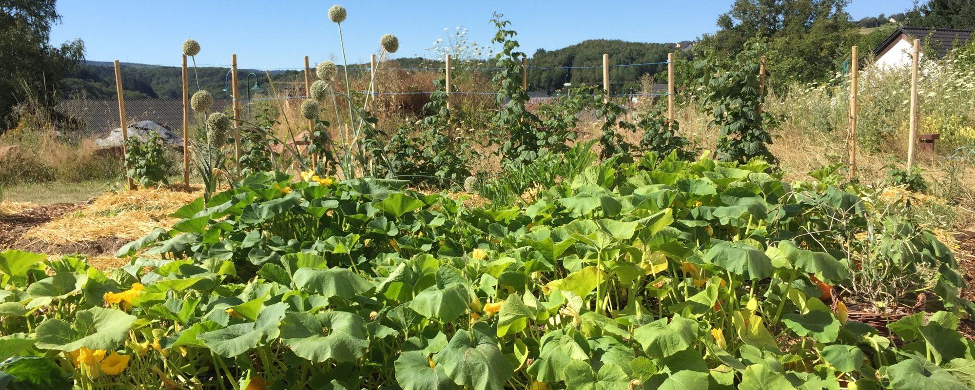 Der Gemüsegarten basiert auf dem Prinzip der Permakultur